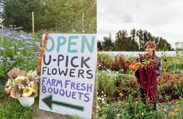 U-Pick flowers at Sweet Alyssum Farm