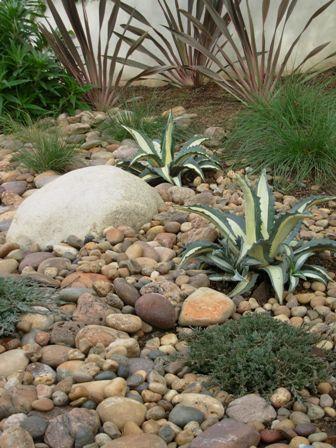 agaves in gravel garden