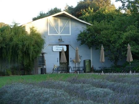 Debra Prinzing Post Modesto Garden Club And Lavender