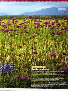 floret flowers - A growing field of alliums