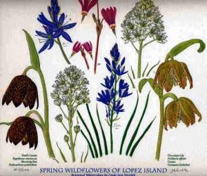 Spring Wildflowers of Lopez Island
