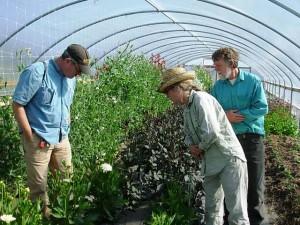 David Perry, Diane Szukovathy and Dennis Westphall at Jello Mold Farm