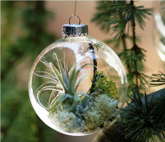 Debra prinzing post a mini terrarium to hang from your tree boughs - Miniature terrarium decorations ...