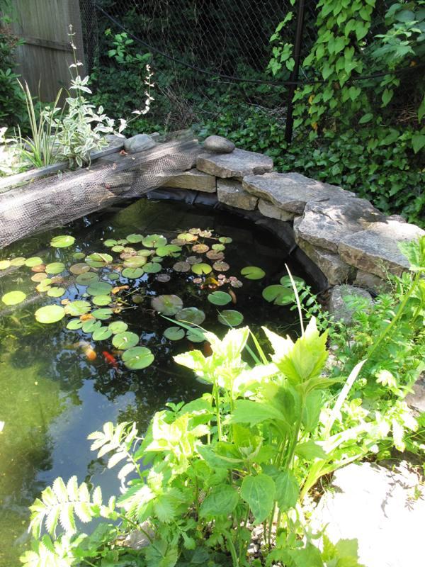 Debra prinzing landscape design for Corner fish pond