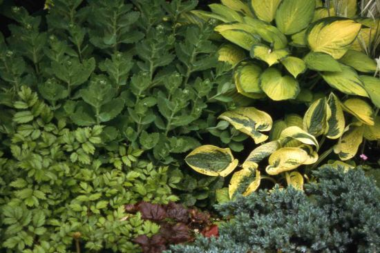Shade Plant Combination