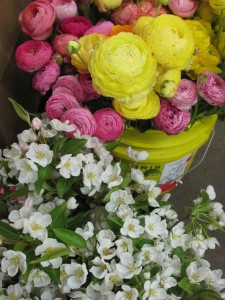 Ranunculus & Cherry blossoms