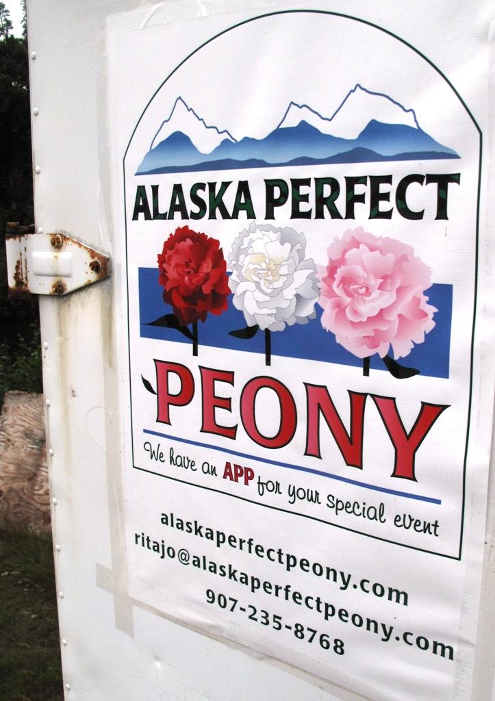 Alaska Perfect Peonies