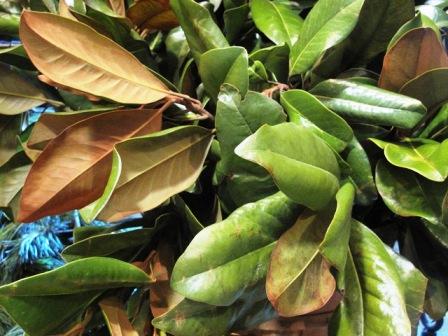 Magnolia foliage