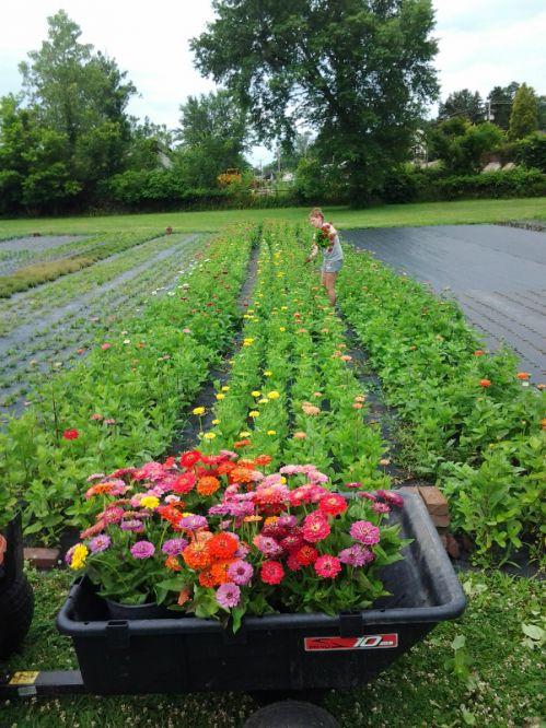 The flower fields at Goose Creek Gardens.