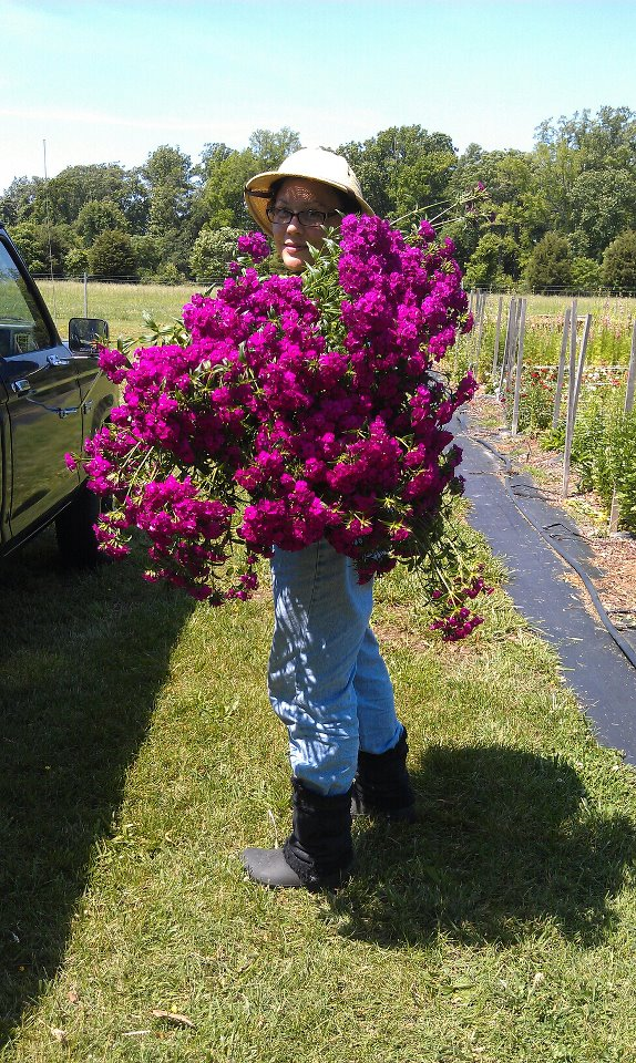 Serious production!! Lisa says her farm produces 10,000 flower stems a week!