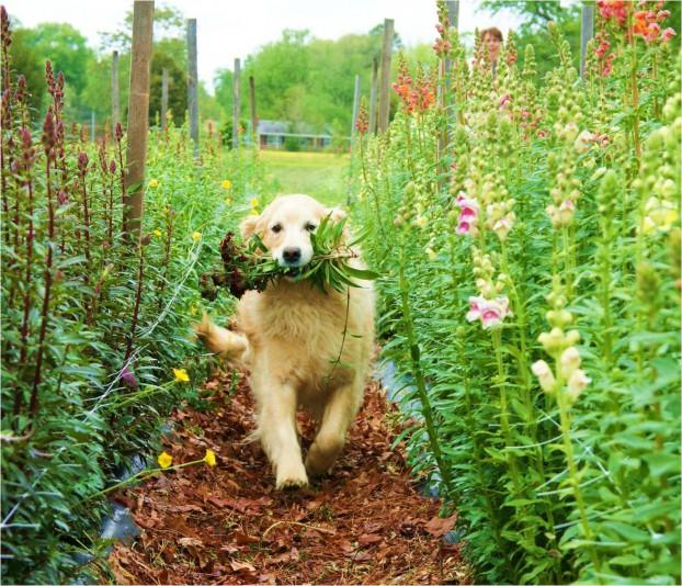 Babs, the farm dog, is Lisa's secret weapon on social media.