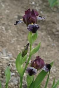 'Rayos Adentro', a sultry MTB iris.