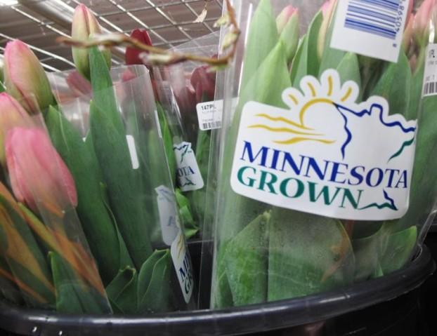 Minnesota Grown tulips