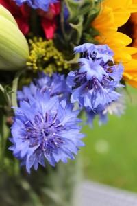 Love this beautiful periwinkle blue bachelor button (Centaurea cyanus)