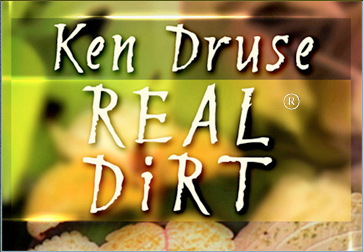 logo KDRD plain