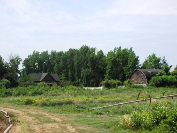 Farmhouse (left) and the soaring three-story barn (right).