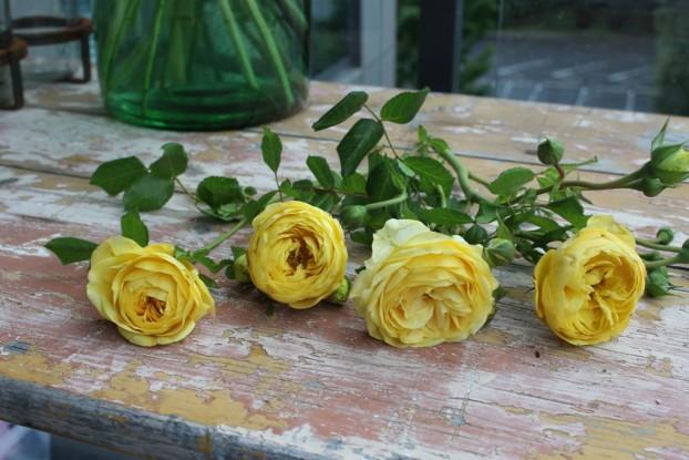 Organic garden roses -- a few go a long way!