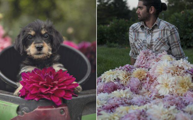 Cute puppy + cut dahlia farmer. You had us a cute! (c) Heather Saunders