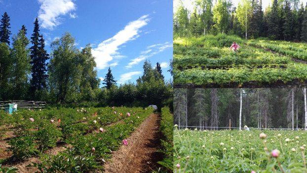 Farm views: left, top, bottom