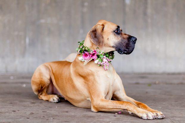 Huxley of Petalon in his floral collar