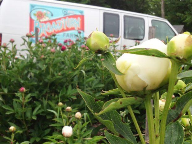Broadturn Farm's vivid branding embellishes the delivery van