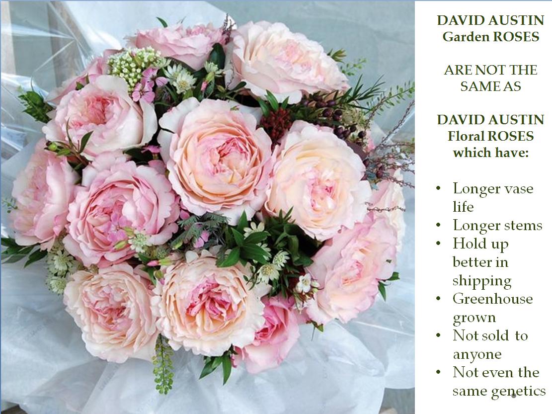 Episode 305 American Flowers Week Recap Rebecca Reed Of David Austin Roses Debra Prinzing