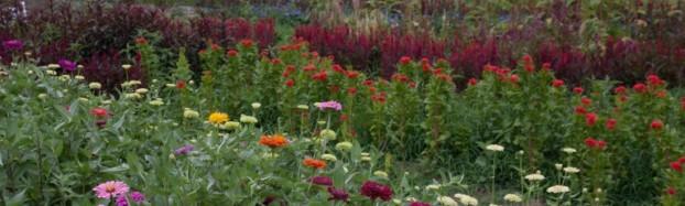Flower Hill Farm's fields at the peak of summer.