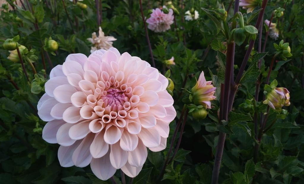 Debra prinzing creativity for Flower delivery bozeman mt