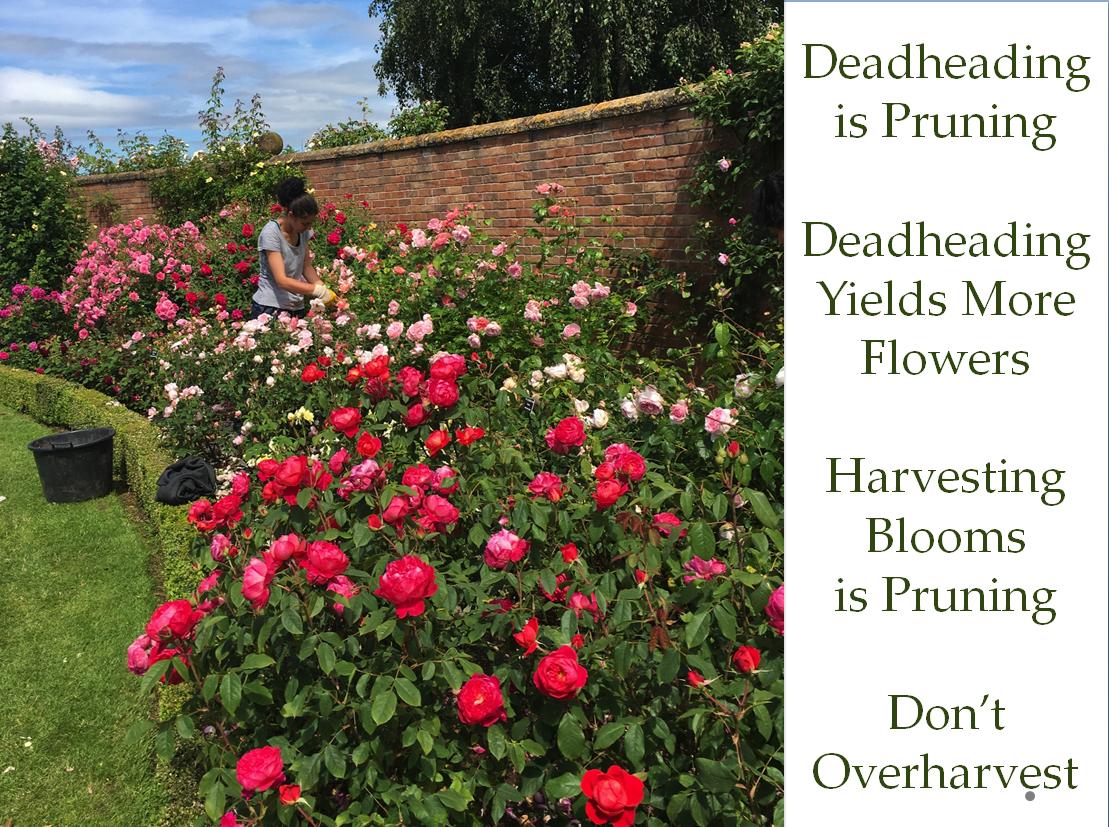 Debra Prinzing » Post » Episode 305: American Flowers Week Recap ...