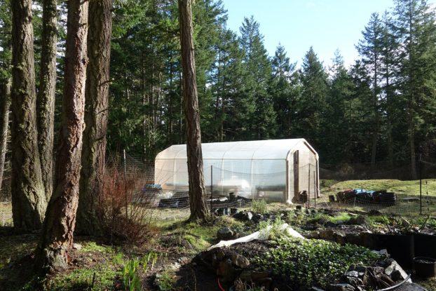 greenhouse at dancing flower farm