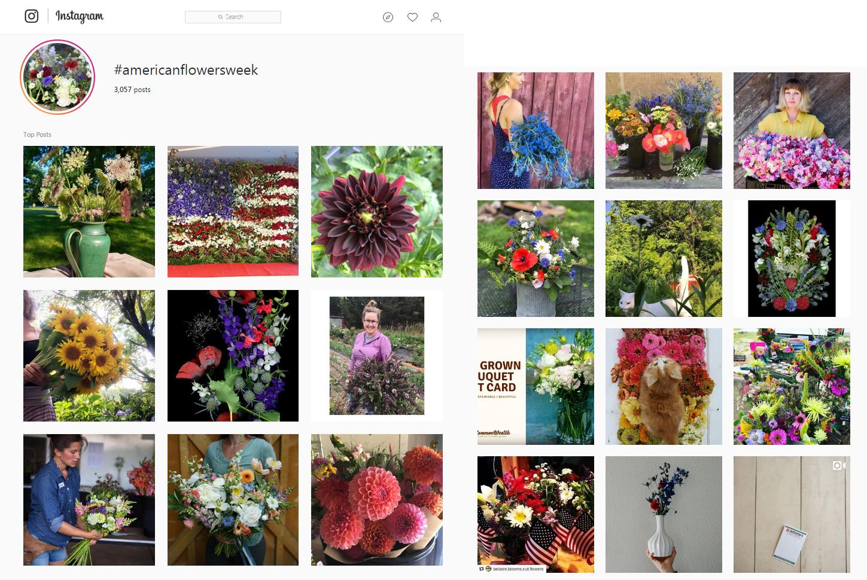 Debra prinzing post episode 356 american flowers week visits americanflowersweek on instagram this week izmirmasajfo